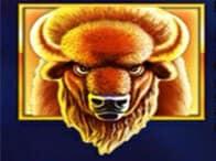 Buffalo Blitz 3 (1)